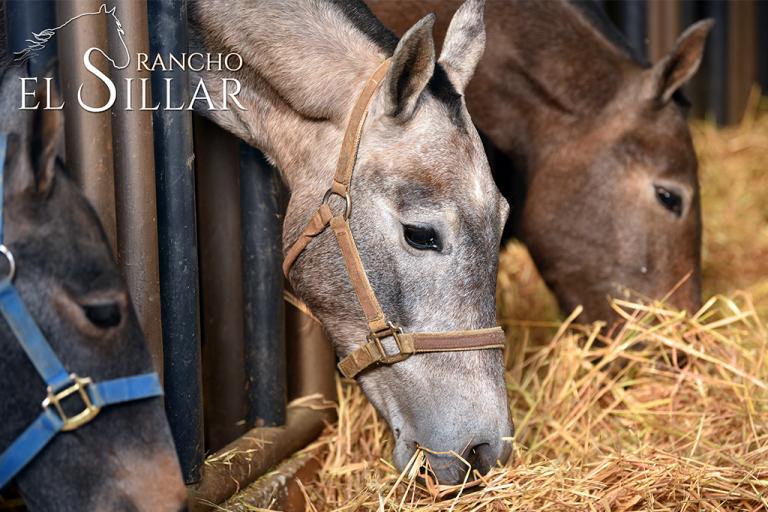 fotografia-lrfilms-produccion-foto-alimentos-publicidad-marca-casa-productora-creativo-yegua-caballos-animales-rancho